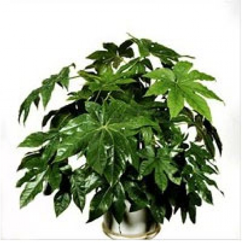 Картинки комнатных растений с названиями и описаниями 4